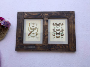 Ilustrace-motyli-dreveny-ram
