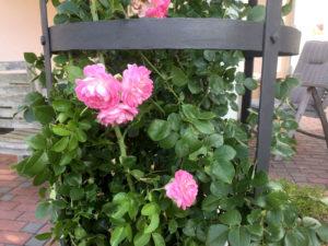 zahradni-stojan-na-popinave-ruze-Towerack